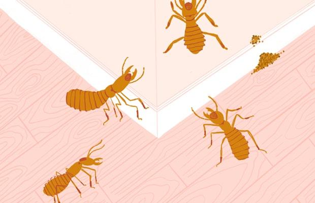 Khi sàn có dấu hiệu bị mọt tấn công bạn nên tiến hành phương pháp xử lý kịp thời